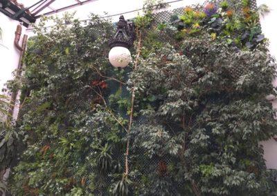 Muro vegetal patio restaurante Café de la Iberia