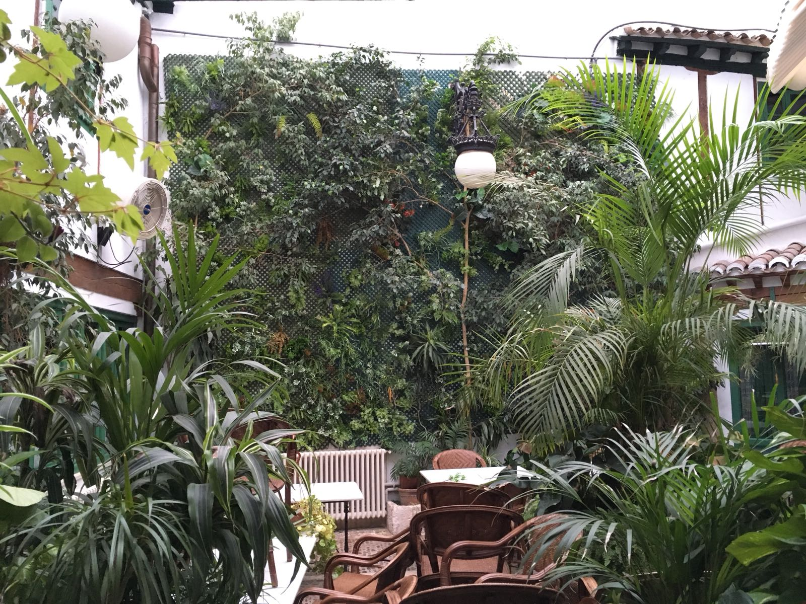 Muro vegetal patio Café de la Iberia